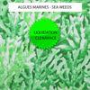 Algues marines - Sea Weeds